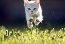 500px Cats / by Hiroaki N