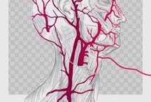 Illustration / by Jessica Lasher