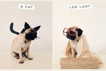 PUG LIFE / by Adrienne Hackney