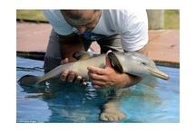 Dolphins! / by Dolphin Cove Inn