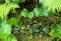 Small Garden Ponds / by Jessica Bedel