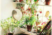 Plant Room / by Jenny McCollum