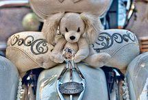 Bikes / by Kim Ferster-Bernard