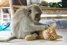 Animal Love / They love, comfort and share....let's do the same to them. / by Kim Brophy