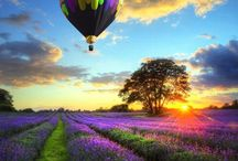 Hot♡Air♡Balloons / by Cheri Lowery