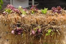 Garden | Straw Bale | Food Garden / by Elizabeth