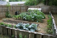 Farm living...the dream. / by Stephanie Sapp
