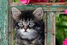 for the love of cats / by linda costello