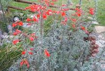 Wildflowers and Native plants / Wildflowers and native plants / by Jane Gates