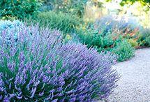 Garden / by Julie Kinworthy