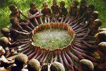 AFRICA. / by Danielle Harton