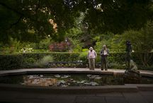 Summer in the Park 2014 / by Central Park Conservancy