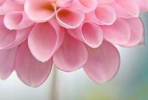 Fleurs / by Clémence Gouache