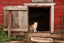 On The Farm / by Adrian Maryott