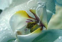 Orchid Flower / by Paola Filinesi