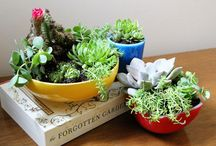 House Plants / by Amy Kelly | That Winsome Girl