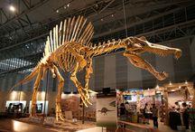 Dinosaurs / by Chris Salcedo
