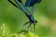 dragonflies, damselflies and spoonwings / by Lilly Lu