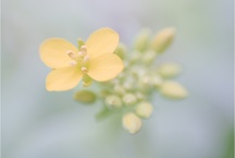 Lensbaby Love / by Kristina Rust Photography