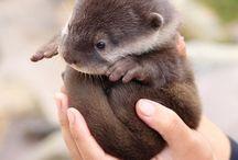 too cute! / by Michelle Chudzinski