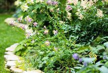 Garden ideas / by Lizette ღ Kingo