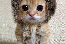 So much cuteness! / by Kendra Gerber