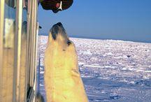 Polar Bears / by Sydney DeHaas