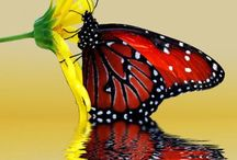 Butterflies / by Patricia Hayes