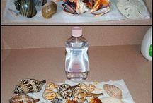 Seashells by the Seashore... / by Jan Cabe Moore