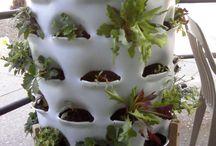 Vertical gardens / by DIY Runaway
