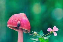 Things I love . . . SHROOMS / by Heather Beck