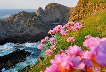 Ireland's Beauty / by Catherine Wadhams