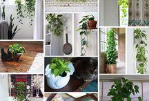 House Plants / by Suu P