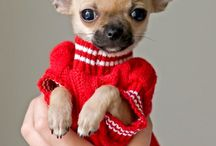 So Cute / by Judy Johnstone