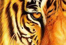 Those Eyes... / by PrideRock Wildlife Refuge