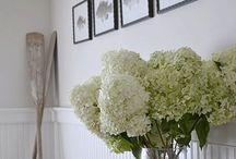 Hydrangeas / by Hamptons Style