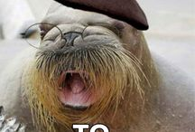 Funny! / by Rhonda Stephens