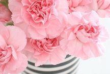 i LOVE flowers / by Beth Ann Schmidt