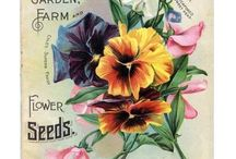 Seeds Packets Old Days :) / Beautiful Art On A Package Of Seeds ❤️ / by Janet Keith