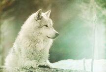 Wolves / by Joan Gunter Lee