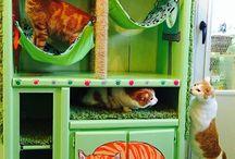DIY Pet Furniture / by Jennifer Melbye