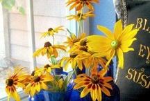 Blue & Yellow / by Julie-Ann Neywick