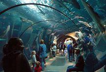 Aquariums / by Niola Dychwelyd