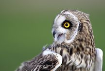 Owls / by Галинка Калашник