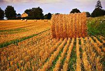 Hay * Alfalfa / by GR2Food