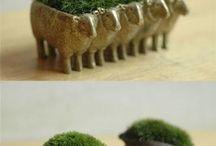 Pot Plants / by Gardening Gals