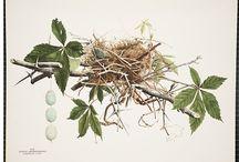 Birds / Lovely friends,flying flowers / by Janice Weiss