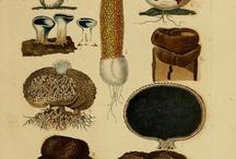 Mycology / by Julia Banzai