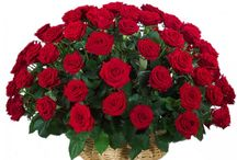 Valentine's Basket Arrangement / If you want to make your Valentine's Day more special and excited, or want to express your feelings to your beloved then floristsinindia.com will help you to do that. We are offering a verity of Basket Arrangement especially for Valentine's Day. / by Florists In India