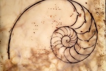 Nature - Nautilus / by Terri Yeske